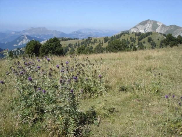 Randonnée Retrouvance dans les Hautes Alpes